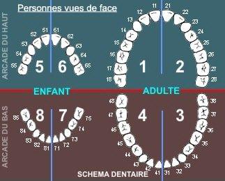 schéma dentaire