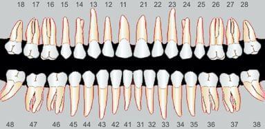 schéma dentaire autre vue